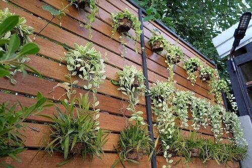 Fire ideer for å forvandle en vanlig vegg til en vertikal hage