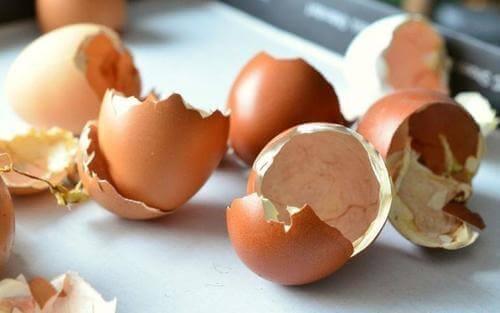 Eggeskall