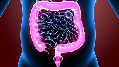 amøber kan påvirke magen