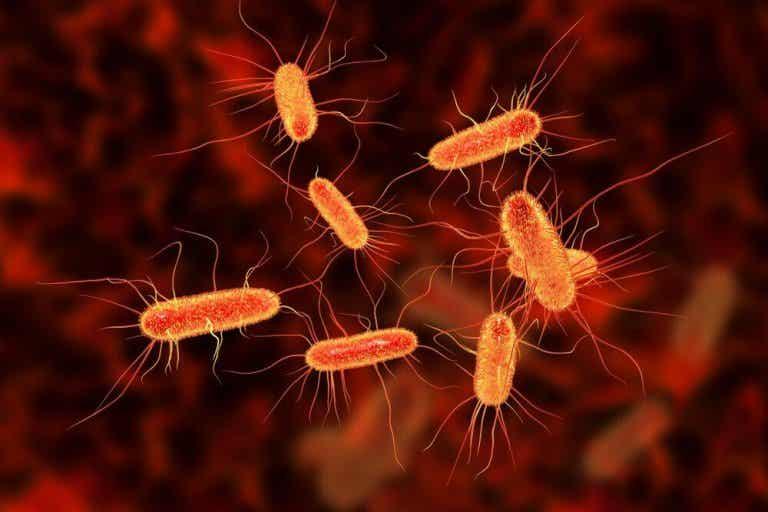 Kurer infeksjoner i tarmene med naturlige remedier!