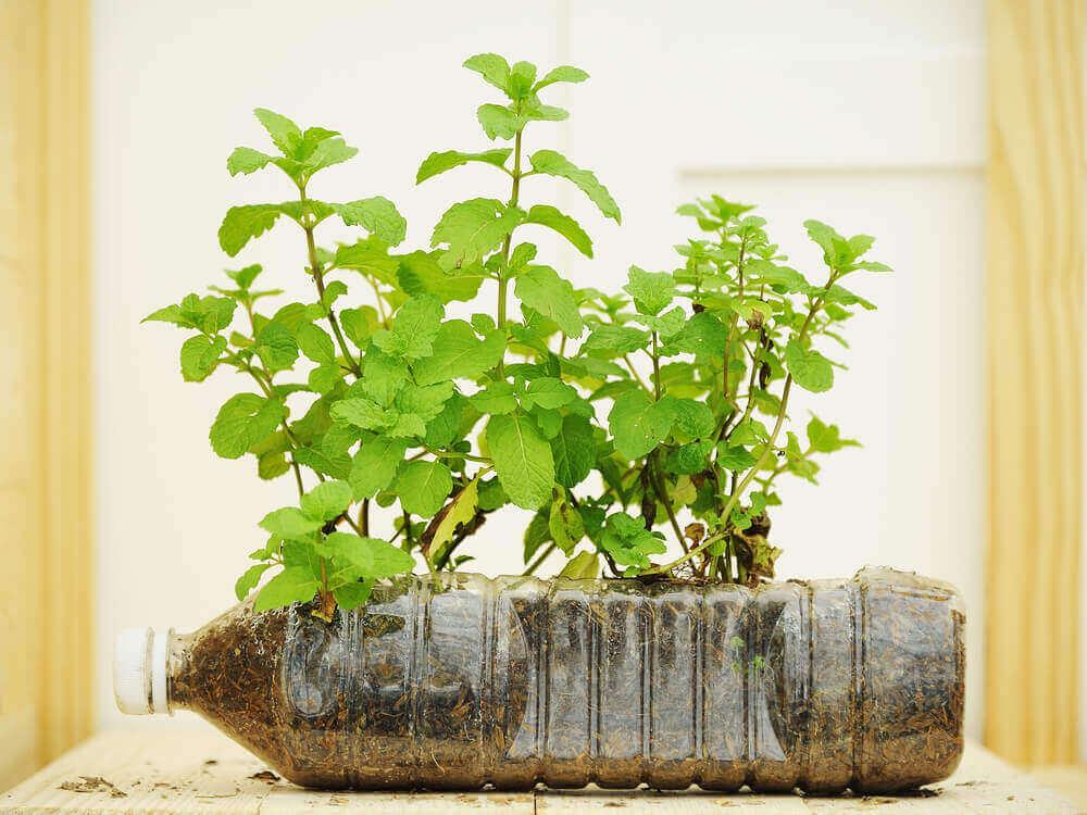 grønne planter i potte av plastflaske