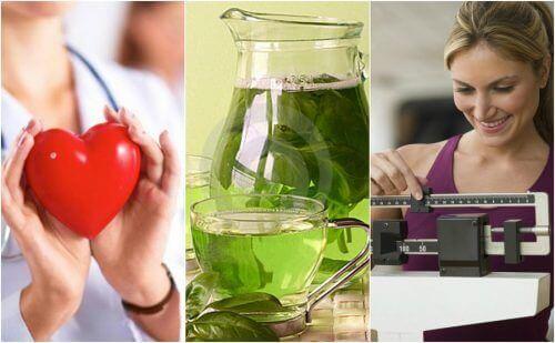 6 viktige fordeler med å drikke grønn te