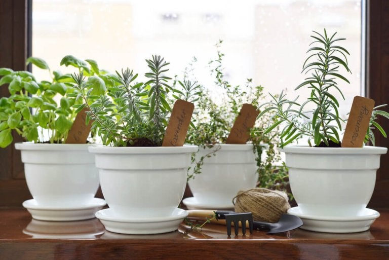 Lag din egen aromatiske hage