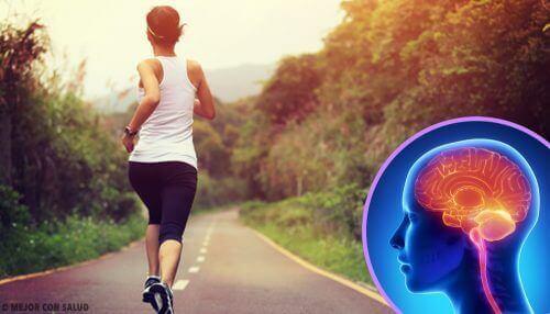 Når du slutter å trene, endres hjernen din