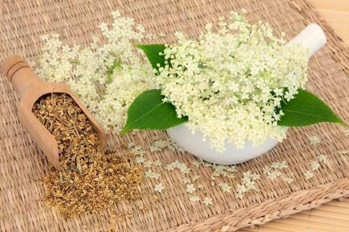 helbredende planter - mjødurt