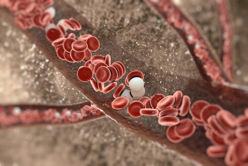 Blodomløpet