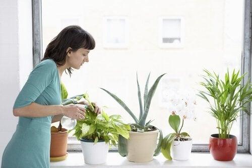 kvinne passer på plantene sine