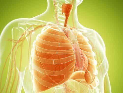 Naturlige preparater for å avgifte lungene