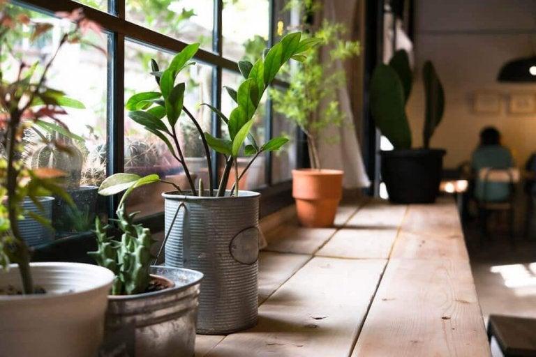 Planter i hjemmet kan gi deg helsefordeler