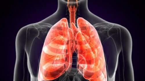 Hva er lungepest?