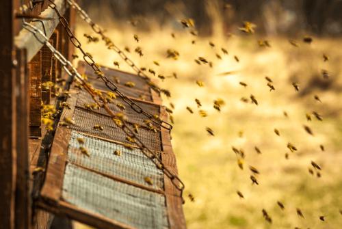 bier lager dronninggelé
