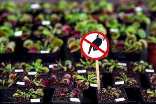 Syv farlige planter du ikke bør ha hjemme