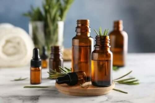 Oppdag bruksområdene til og fordelene med rosmarin