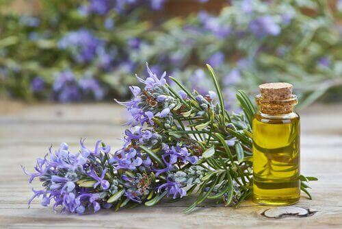 Blant fordelene med rosmarin, er det bra for både hud og hår.