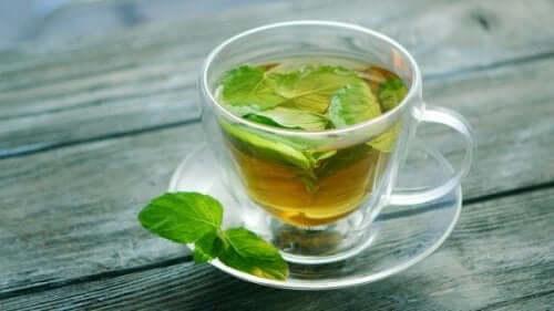 Oppdag helseegenskapene til mynte-te