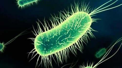 Bakterier forårsaker blærekatarr etter samleie