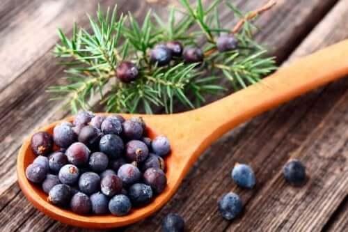 Medisinske planter som hjelper deg å bli kvitt cellulitter