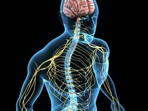 Kolin er et stoff som kontrollerer humøret.