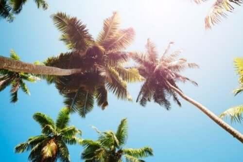 Fordelene av kokosnøttedikk.