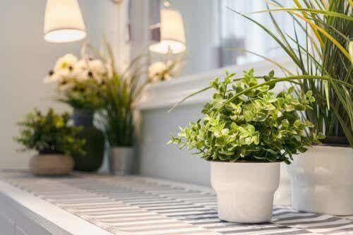 Noen gode tips for å ta vare på inneplanter