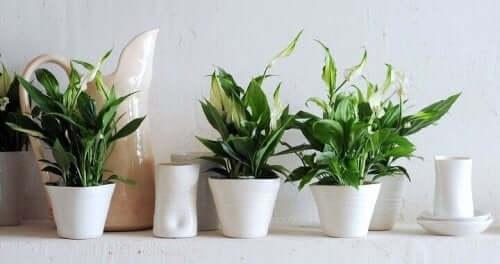 Tips for å ta vare på inneplanter.