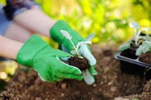 Ting å huske på når du skal plante om planter