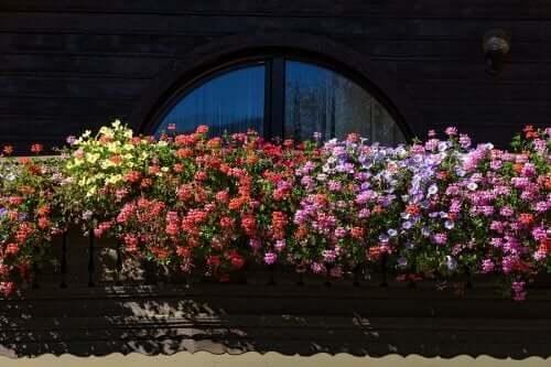 Fem velduftende blomster for en liten hage