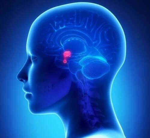 Svulster i hypofysen er som regel godartede.