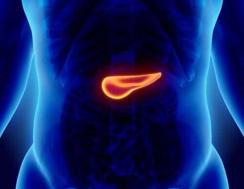 En blå mage der bukspyttkjertelen er fremhevet
