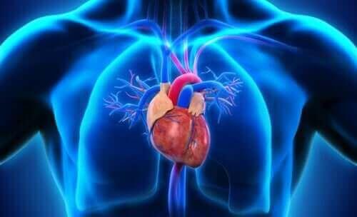 Menneskehjertet i en blå kropp