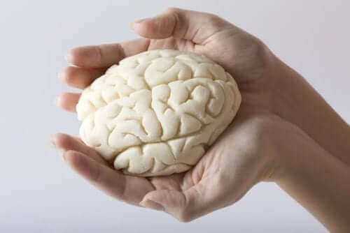 Et par hender som holder en modell av hjernen