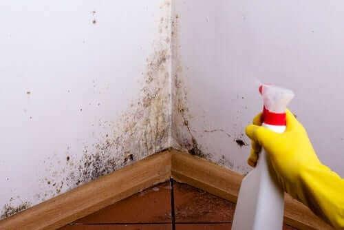 En person som fjerner mugg fra veggene.