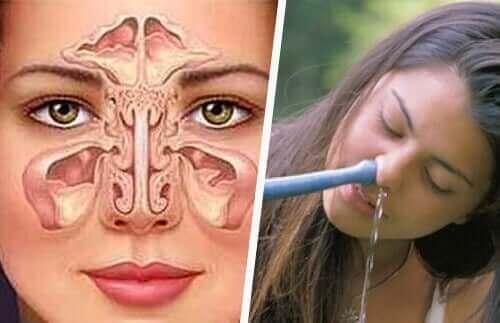 Et diagram av luktesystemet og en kvinne med en neti gryte.