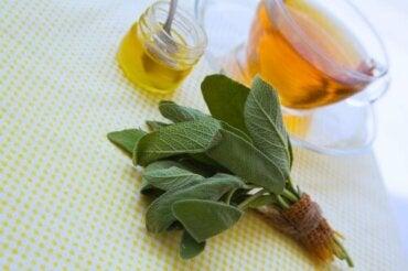 Salvie og honning for å behandle kutt og skrubbsår