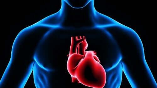Illustrsjon av hjertet.