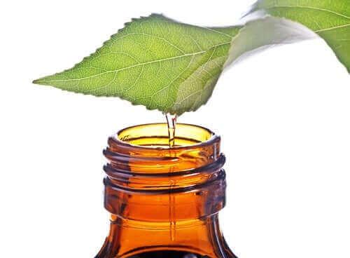 Olje fra plante som tappes på en flaske