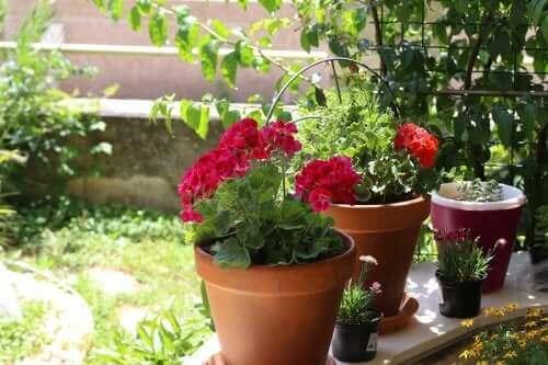 Vakre sommerblomster: seks alternativer til hagen din