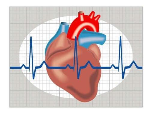 En digital fremstilling av hjertet.