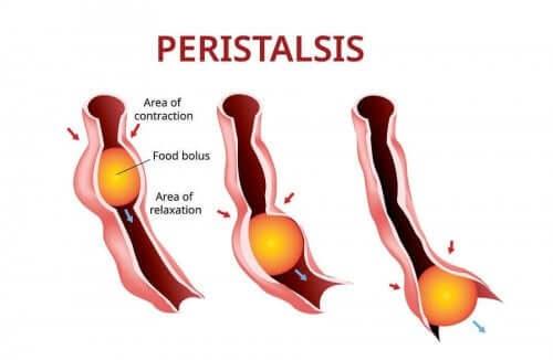 En representasjon av peristaltikk.