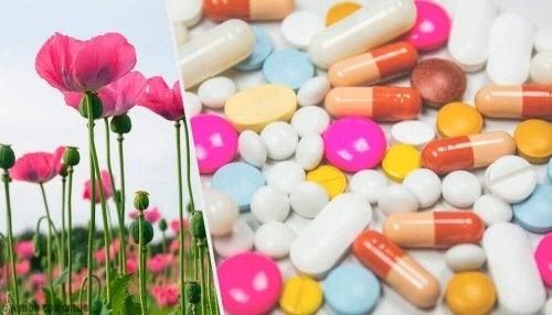 Et bilde med valmuer og opioider.