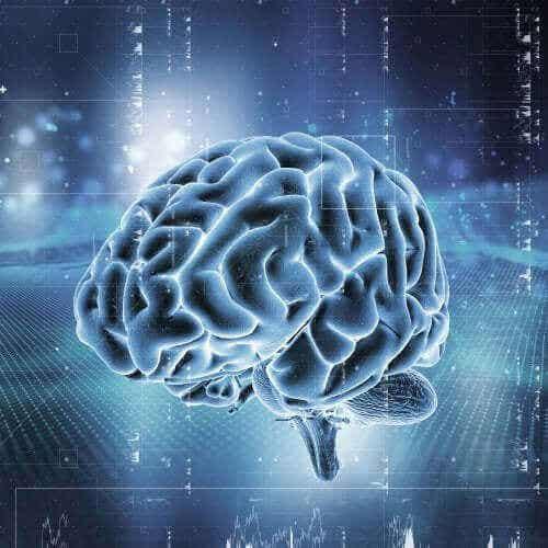 Hjernens belønningssystem: hvordan fungerer det?