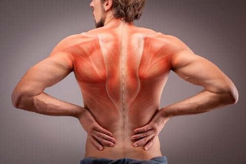 Gjør deg kjent med ryggmusklenes anatomi