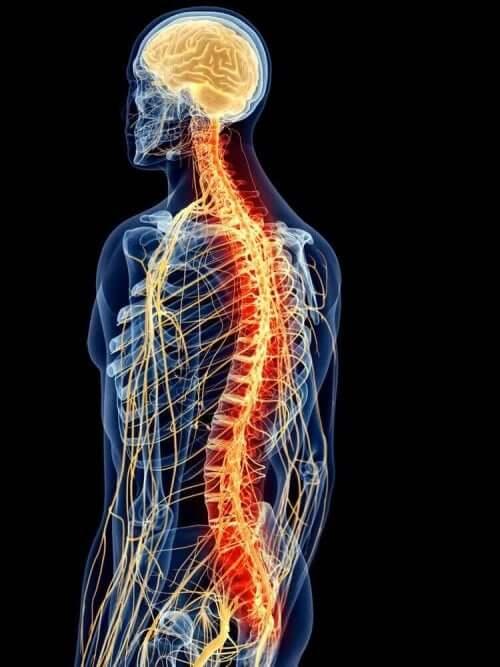 Ryggmusklenes anatomi er kompleks.