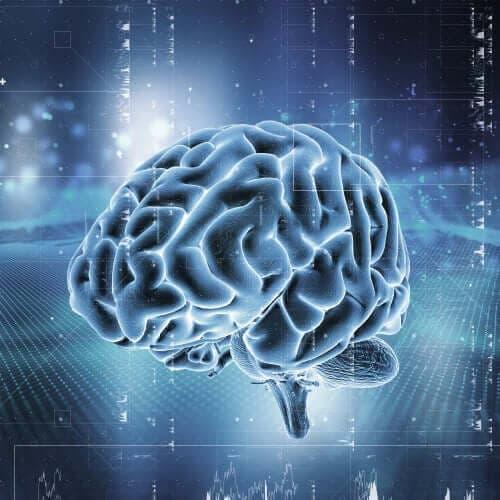 En hjerne
