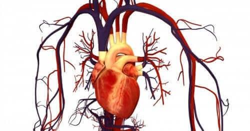 En illustrasjon av et hjerte.