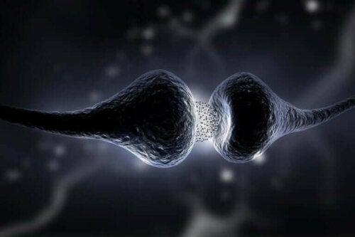 synapsene i hjernen lar nevronene kommunisere