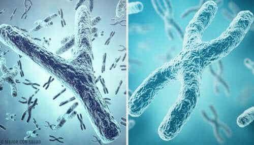 Den genetiske opprinnelsen til kjønn: X og Y kjønnskromosomer