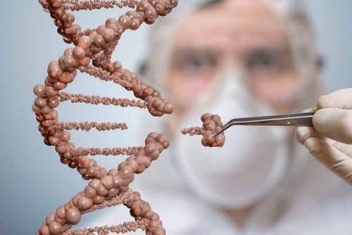 Telomerer er nødvendige for mange prosesser.