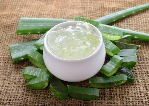 Aloe vera-gelé