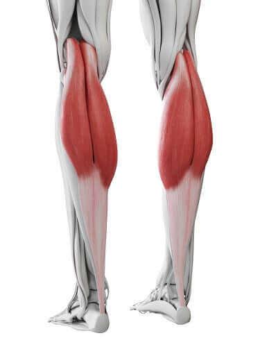 Et diagram av leggmuskler.